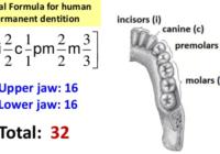 human digestive system in hindi (मानव पाचन तंत्र) की परिभाषा क्या है , भाग , कार्यविधि , अंग