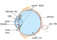 नेत्र गोलक किसे कहते हैं ? नेत्र गोलक की भित्ति क्या होती है ? what is eyeball in hindi definition